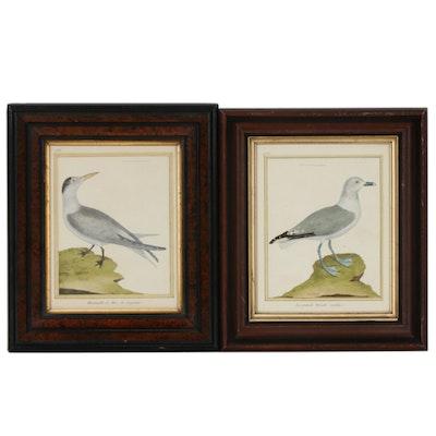 """François Nicolas Martinet Engravings From """"Histoire Naturelle des Oiseaux"""""""