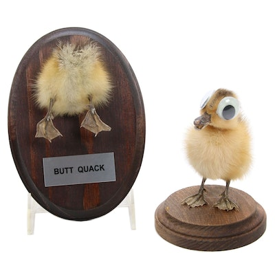 """""""I've Got My Eyes on You"""" and """"Butt Quack"""" Gang Taxidermy Ducklings"""