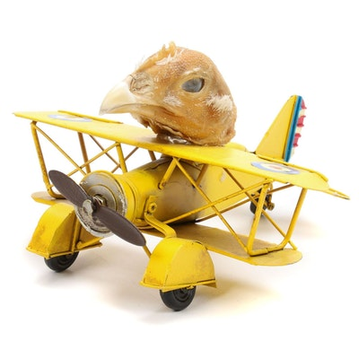 WWI Flying Ace Metal Model Airplane with Taxidermy Chicken Head