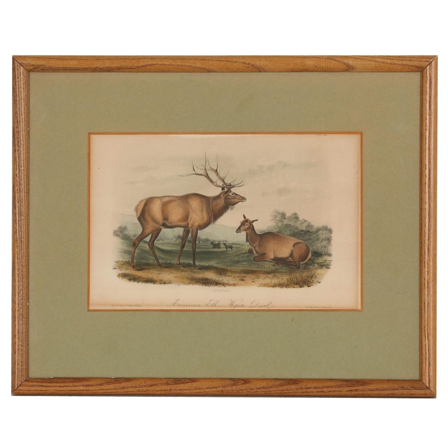 "J.T. Bowen Hand-Colored Lithograph ""American Elk-Wapiti Deer"", Mid 19th Century"
