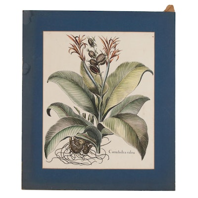 "Hand-Colored Lithograph after Basilius Besler ""Canna Indica Rubra"", 20th Century"