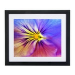 """Arra Bella Rose Flower Abstract Giclée """"Purple and Yellow Pansy"""""""