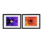 """Arra Bella Rose Flower Abstract Giclées """"Purple Pansy"""" and """"Orange Daisy"""""""