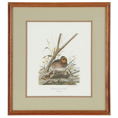 "John Ruthven Offset Lithograph ""Bobwhite Quail with Young"""
