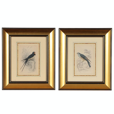 Hand-Colored Ornithological Engravings after Sir William Jardine, 19th Century