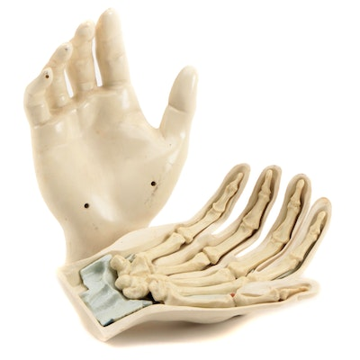 Medical Human Hand Anatomical Model, Mid-20th Century