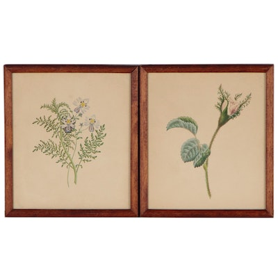 Botanical Colored Pencil Drawings, 20th Century