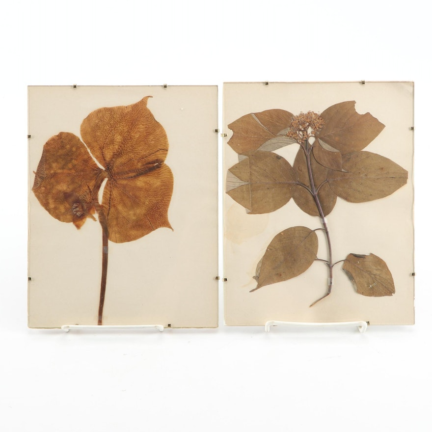 Framed Pressed Leaves Wall Décor