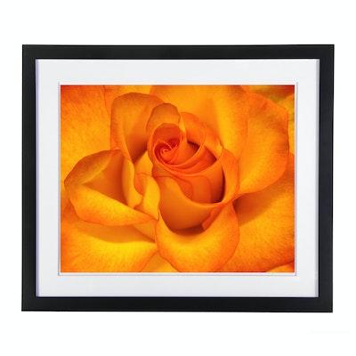 """Arra Bella Rose Flower Abstract Giclée """"Orange Rose"""""""