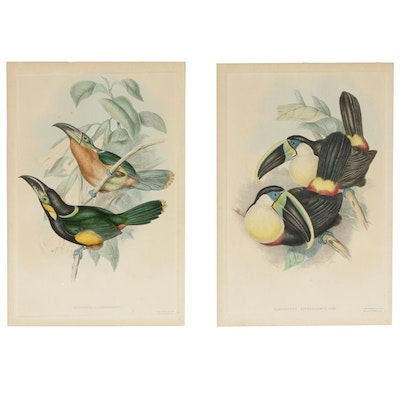 Gould & Richter Ornithological Hand-Colored Lithographs, 19th Century