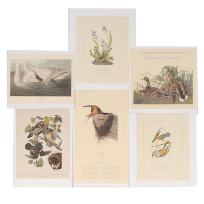 Contemporary Offset Lithographs after J.J. Audubon