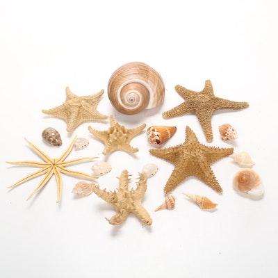 Starfish and Seashell Collection