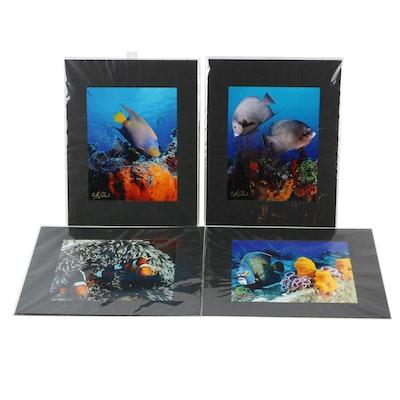 Cathy Church Photographs of Underwater Wildlife