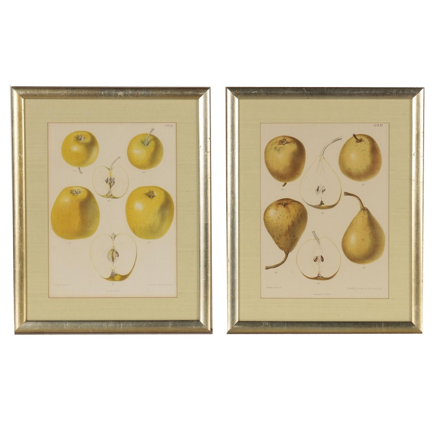 G. Severeyns Lithographic Prints of Pears and Apples