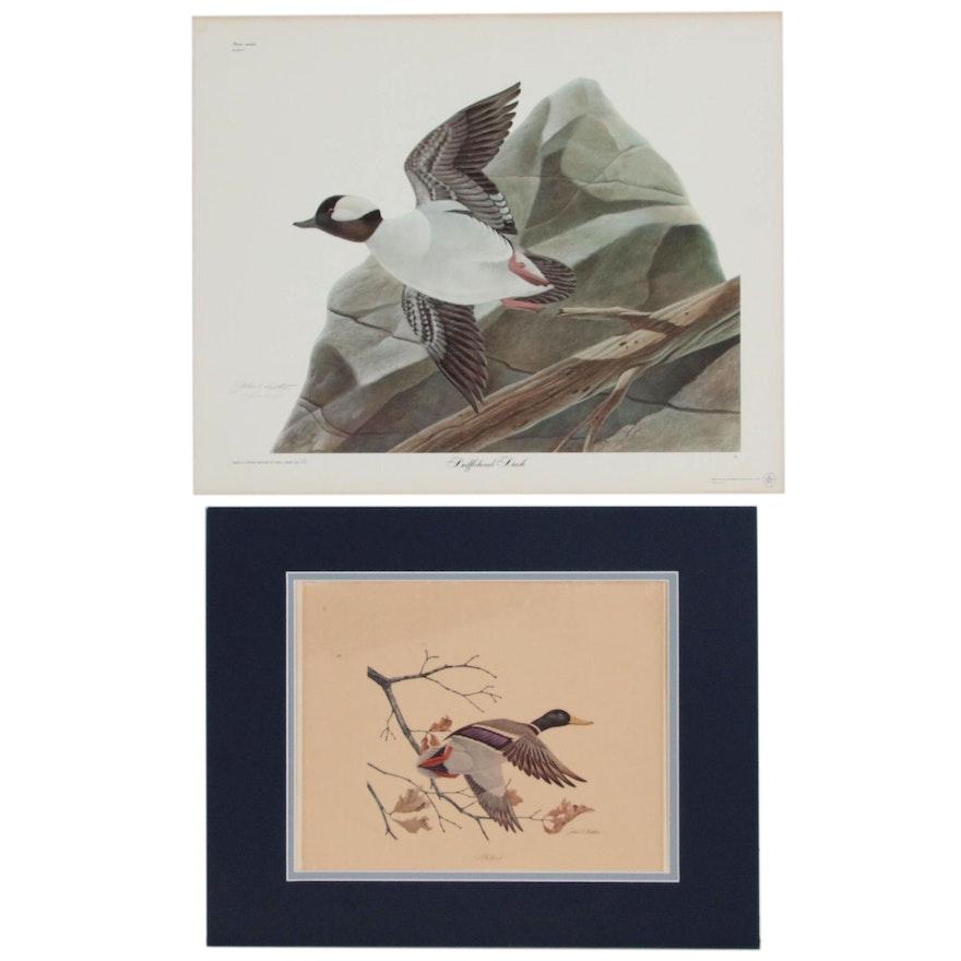 """John Ruthven Offset Lithograph """"Bufflehead Duck"""" and """"Mallard"""""""