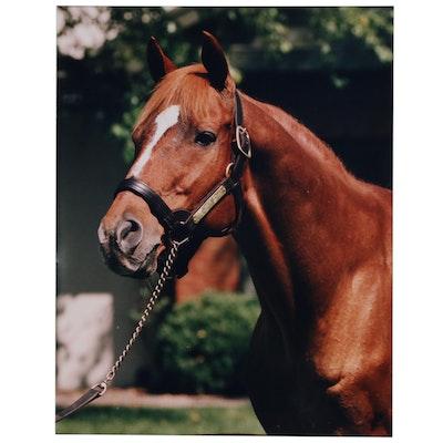 Digital Photograph of Chestnut Horse, 20th Century