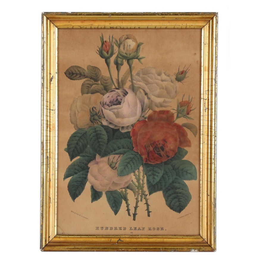 """Floral Hand-Colored Lithograph """"Hundred Leaf Rose"""", 19th Century"""