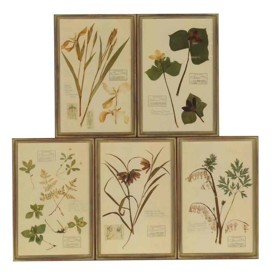 Offset Lithographs After Botanical Samples, Late 20th Century