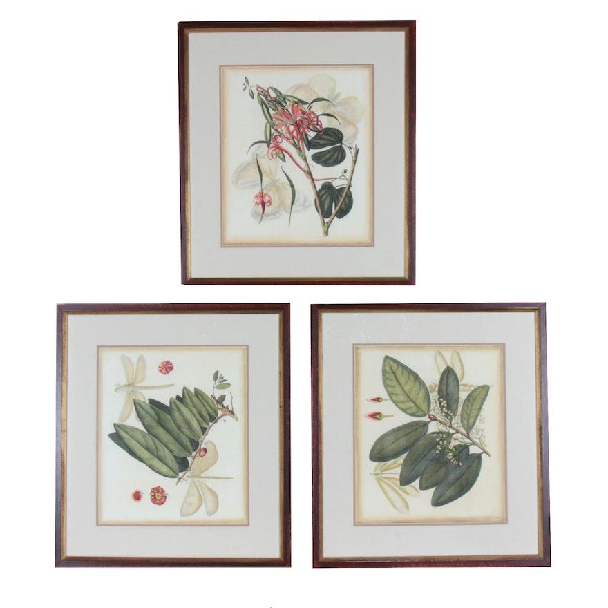 Set of Three Botanical-Themed Offset Lithographs
