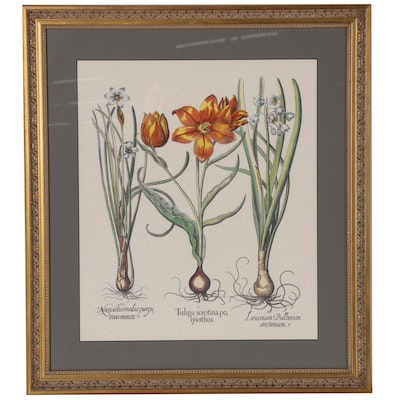 Hand-Colored Lithograph after Basilius Besler of Narcissus