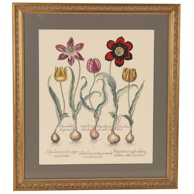 Hand-Colored Lithograph of Tulips after Basilius Besler, 20th Century