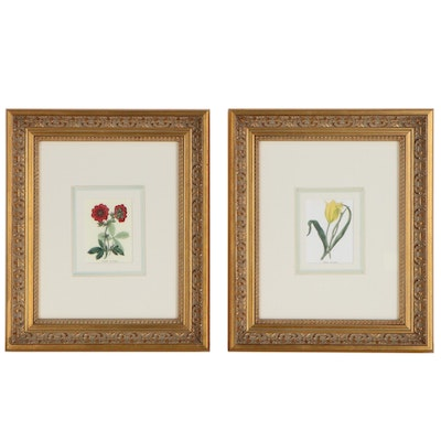 Offset Lithographs of Floral Species, 21st Century