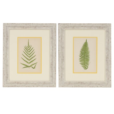 """Woodblocks after Edward Lowe for """"Ferns: British and Exotic"""", Mid 19th Century"""