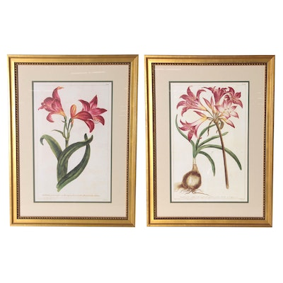 Botanical Offset Lithographs after T. Jefferys, Late 20th Century