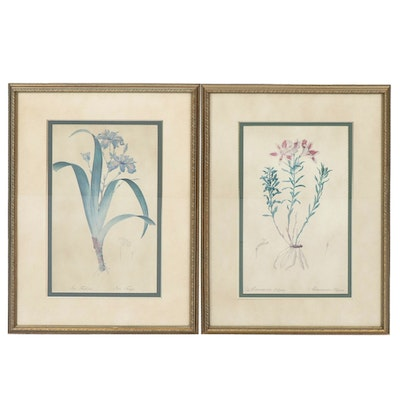 Botanical Offset Lithographs, 20th Century