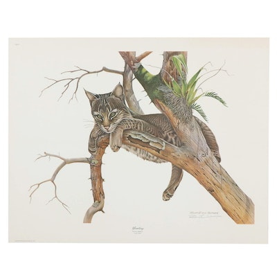 """Richard Evans Younger Offset Lithograph """"Yearling, Young Bobcat"""""""