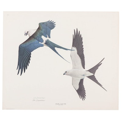 """William Zimmerman Offset Lithograph """"Swallow-Tailed Kite"""""""