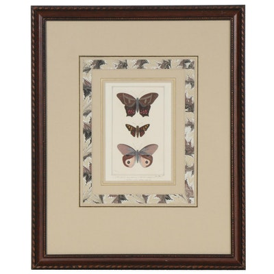 Hand Painted Lepidopterology Lithograph, Late 19th Century