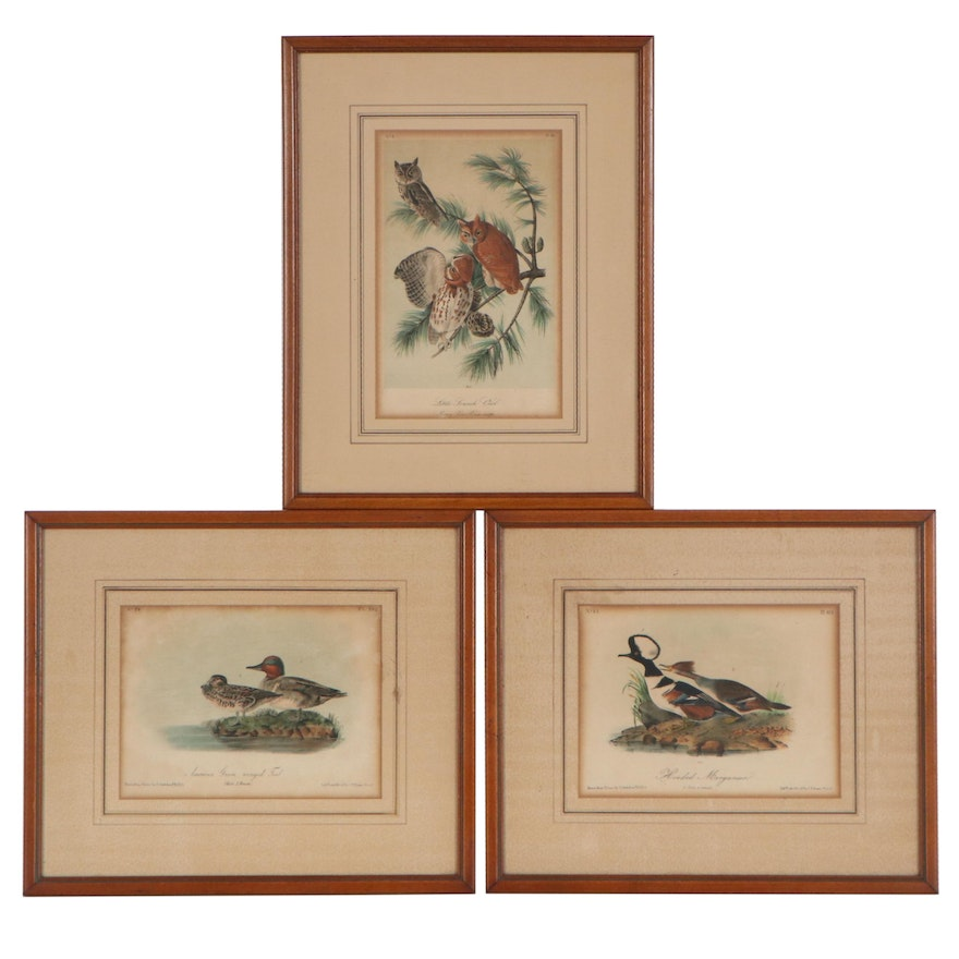 """Hand-Colored Lithographs from Audubon's """"The Birds of America,"""" Mid-19th Century"""