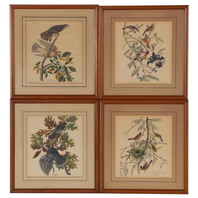 Offset Lithographs after J.J. Audubon Ornithological Illustrations