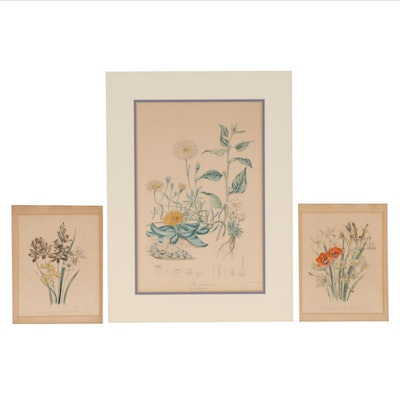 Hand-Colored  Botanical Lithographs, 19th Century