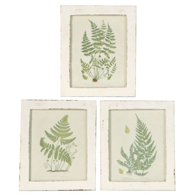 "Offset Lithographs after Anne Pratt ""Ferns of Great Britain,"" Late 20th Century"