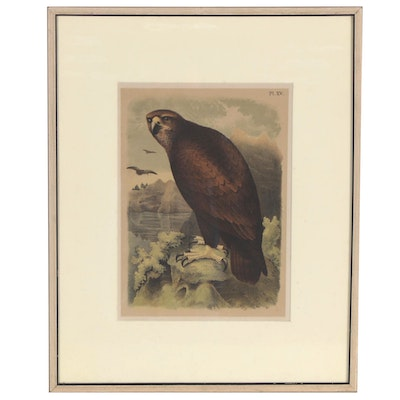 "Theodore Jasper Color Lithograph ""Grey, or Sea Eagle,"" circa 1881"