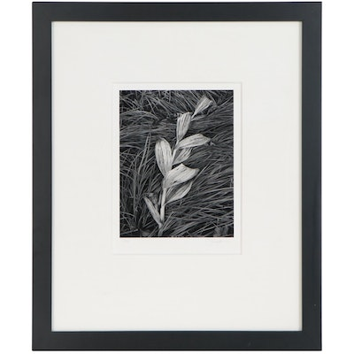"John Sexton Silver Gelatin Photograph ""Corn Lily and Grasses"", 1996"