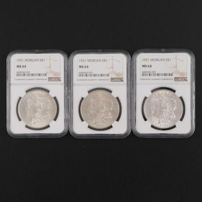 Three NGC Graded MS64 1921 Morgan Silver Dollars