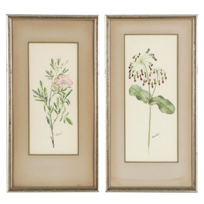 Botanical Watercolor Paintings, Late 19th to 20th Century