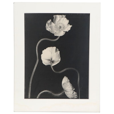 """Tom Baril Toned Silver Print """"3 Poppies #2,"""" 1999"""