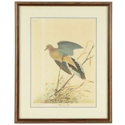 """John Ruthven Offset Lithograph """"Mourning Dove"""""""