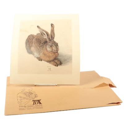 "Collotype after Albrecht Dürer ""Young Hare"""