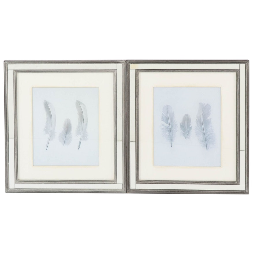 Giclees of Feathers after W. C. Aitken