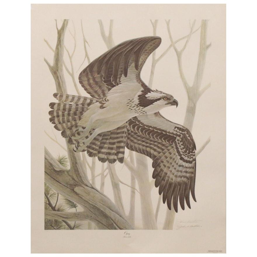 "John A. Ruthven Offset Lithograph ""Osprey,"" 1981"