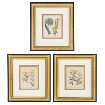Hand-Colored Botanical Engravings after Syd Edwards