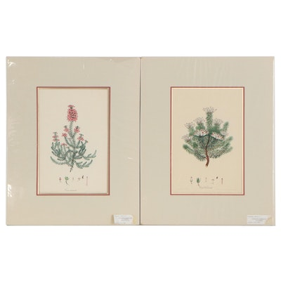 """Henry Cranke Andrews Hand-Colored Engravings including """"Erica Ventricosa"""""""