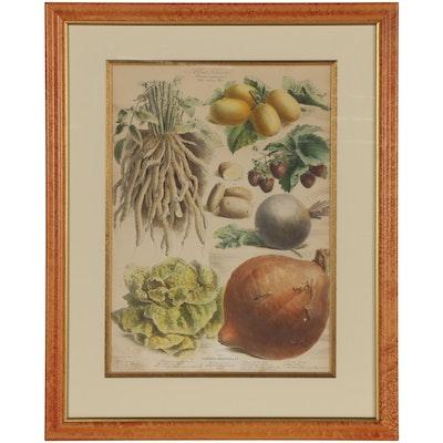 """Lithograph Advertisement for Album Vilmorin: """"Les Plantes Potagères"""""""