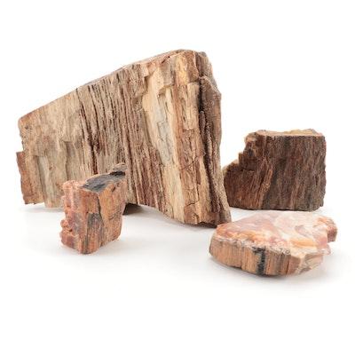 Petrified Wood Specimens