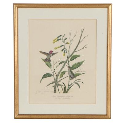 """John Ruthven Offset Lithograph """"Anna's Hummingbird"""""""